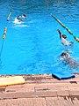 Backstroke race.jpg