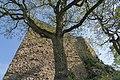 Badenweiler - Kurpark - Flaum Eiche (95).jpg
