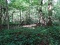Balade en Forêt de Verrières le 20 août 2017 - 039.jpg
