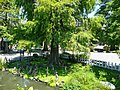 Bald Cypress Trees 落羽松 - panoramio.jpg