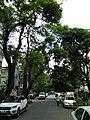 Bangalore Sanjay nagar street trees 9.jpg