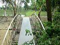 Bangla Trac Cricket Academy, Rajshahi .....JPG