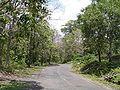 Baratang Andaman 4170084.JPG
