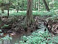 Battle Creek Cypress Swamp 44.jpg