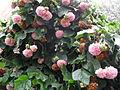 Baum mit Blüten (1).JPG