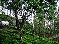 Beauty of green mountain.jpg