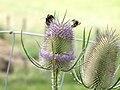 Bee attack (3775306333).jpg