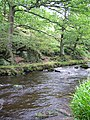 Beeches by the River Dane - geograph.org.uk - 317983.jpg