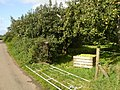 Belmont Road Apple Trees - geograph.org.uk - 568749.jpg