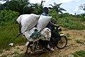 Benskineur sur une moto chargée de sacs.jpg