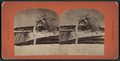 Bent tree above falls, winter, from Robert N. Dennis collection of stereoscopic views.png