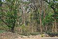 Bethuadahari Wildlife Sanctuary - Indian National Highway 34 - Nadia 2013-03-23 7078.JPG