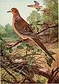 Bird biographies (1923) (20196558059).jpg