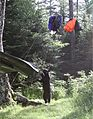 Black Bear on cables.jpg