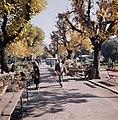 Bloemenkarkt in Ascona, Bestanddeelnr 254-6073.jpg
