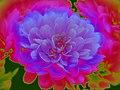 Blooming (23467394898).jpg