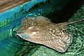 Blue Reef Aquarium 9 March 2005 Cornwall e (278546322).jpg