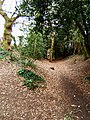 Bluebottle Grove, Colchester - geograph.org.uk - 142655.jpg