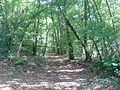Bois de la route de La Queurie - panoramio.jpg