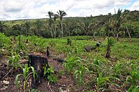Shifting cultivation - Wikipedia