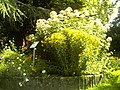 Botanischer Garten Freiburg - Botany Photography - panoramio (8).jpg