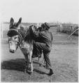Boy mounting burro - NARA - 285464.tif