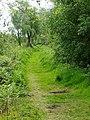 Brackagh moss - geograph.org.uk - 1327940.jpg