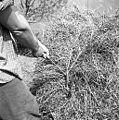 Breme od blizu zakljukano, Primorska 1959.jpg