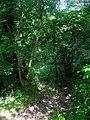 Bridleway, Wroxall Copse - geograph.org.uk - 508525.jpg
