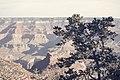 Bright Angel Trail, South Rim, Grand Canyon (30727068452).jpg