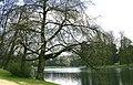 Bruxelles - Étang - Bois de la Cambre 2.JPG