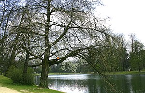 Bois de la Cambre - View of the lake at the Bois de la Cambre