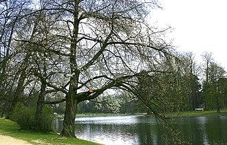 Bois de la Cambre - Image: Bruxelles Étang Bois de la Cambre 2