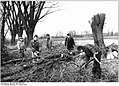 Bundesarchiv Bild 183-1987-0216-004, Lübtheen, Beschneiden von Weiden.jpg