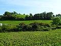 Burren Townland - geograph.org.uk - 1483770.jpg