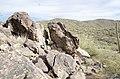 Butcher Jones Trail to Pinter's Point Loop, Tonto National Park, Saguaro Lake, Ft. McDowell, AZ - panoramio (50).jpg