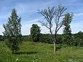 Butrimonių sen., Lithuania - panoramio (20).jpg