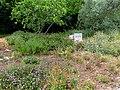 Butterfly garden in Rakefet (2).jpg