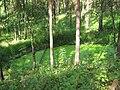 C0390-Zelyony-Gorod-pond.jpg