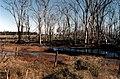 CSIRO ScienceImage 135 Salinity Affected Land.jpg