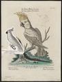 Cacatua sulphurea - 1700-1880 - Print - Iconographia Zoologica - Special Collections University of Amsterdam - UBA01 IZ18600013.tif