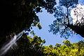 Cachoeira do Roncador.jpg