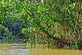 Camino a Durika, Provincia de Puntarenas, Costa Rica - panoramio (5).jpg