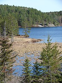 Typical Canadian Shield: pines, lakes, bogs, and rock.