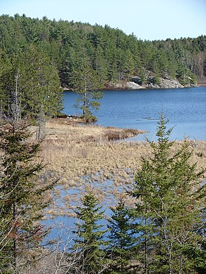 Canadian Shield - Typical Canadian Shield: spruce, lakes, bogs, and rock.