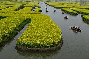Xinghua, Jiangsu - Canola field on water