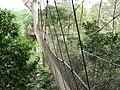 Canopy Walkway Kakum National Park.jpg