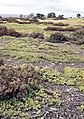 Cantalojas, flora 4.jpg