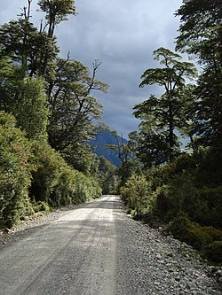 Carretera Austral back in Rainforest (3260743872).jpg