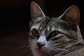 Cat face 06.jpg